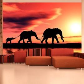 Fotomural - elefantes: familia