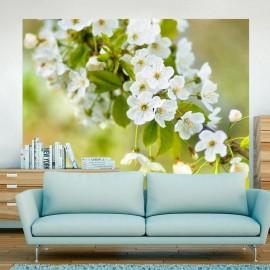 Fotomural - Belas delicadas flores de cerejeira