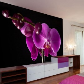Fotomural - elegante orchis