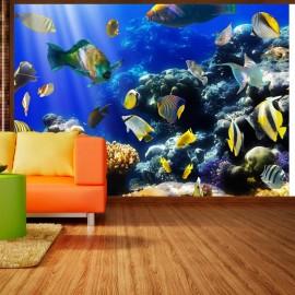 Fotomural - Underwater adventure