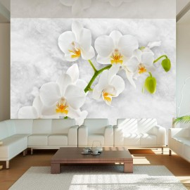 Fotomural - Lyrical orchid - White