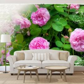 Fotomural - Summer garden