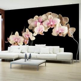 Fotomural - Blooming orquídea