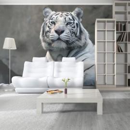 Fotomural - Bengali tigre em zoológico