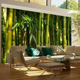 Fotomural - Un bosque de bambú en Asia