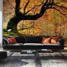 Fotomural - Otoño, bosque y hojas
