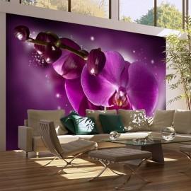 Fotomural - Cuento y orquídea