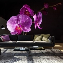 Fotomural - con estilo orchis