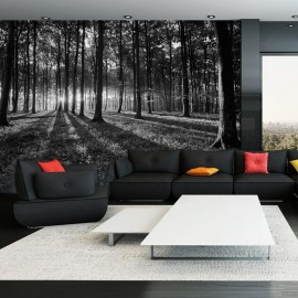 Papel de parede autocolante - The Light in the Forest
