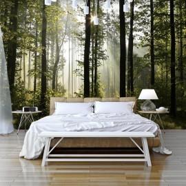 Papel de parede autocolante - Forest: Morning Sunlight