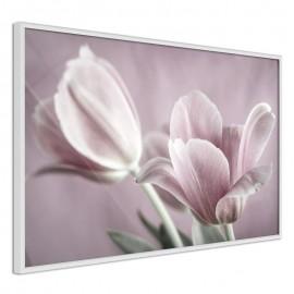 Póster - Pastel Tulips I