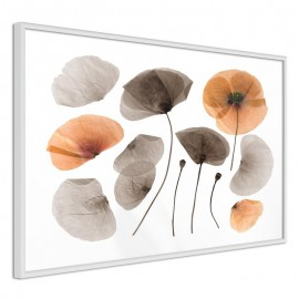 Póster - Dried Poppies
