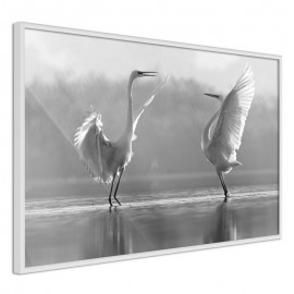 Pôster - Black and White Herons