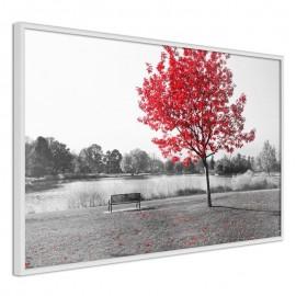 Póster - Autumn Colours I