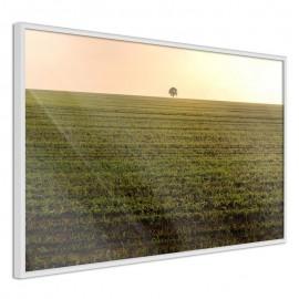 Póster - Farmland