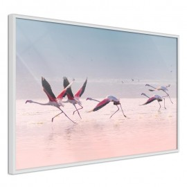 Póster - Flamingos Breaking into a Flight