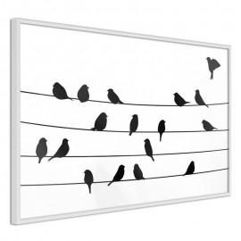 Pôster - Birds Council Meeting