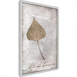 Póster - Dried Leaf