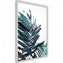 Póster - Evergreen Palm Leaves
