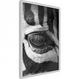 Póster - Zebra Is Watching You