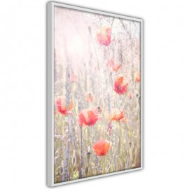 Póster - Poppies