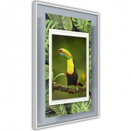 Póster - Toucan in the Frame
