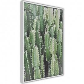Póster - Cactus Plantation