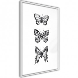 Pôster - Butterfly Collection III