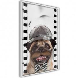 Póster - Dressed Up Pug