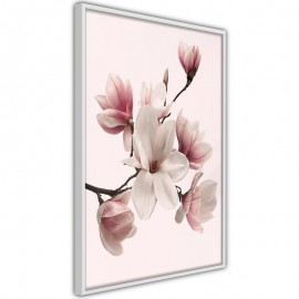 Póster - Blooming Magnolias I