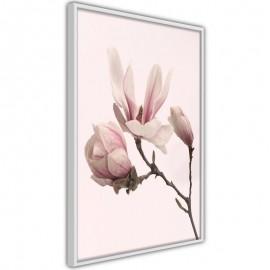 Póster - Blooming Magnolias II
