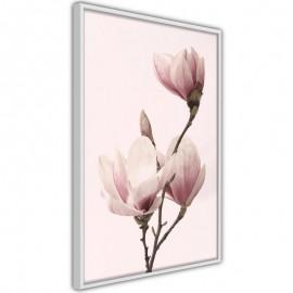 Póster - Blooming Magnolias III