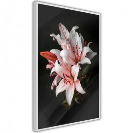 Póster - Pale Pink Lilies