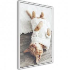 Póster - Kitten Life
