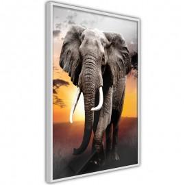 Póster - Majestic Elephant