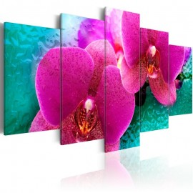 Cuadro - Exotic orchids