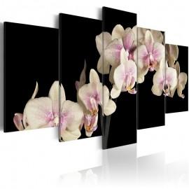 Cuadro - Orquídea sobre fondo contrastante
