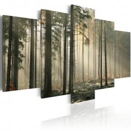 Quadro - Light in a dark forest