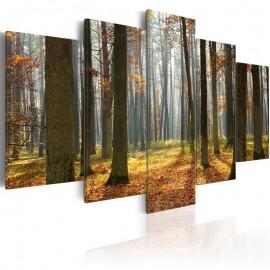 Cuadro - Un maravilloso paísaje forestal