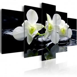 Quadro - Melancholic orchids
