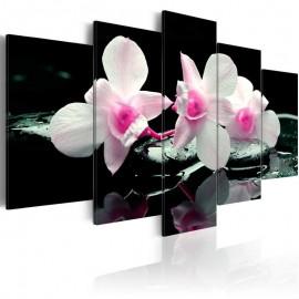 Cuadro - Descanso de orquídea