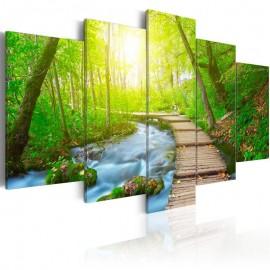 Cuadro - Sunny Forest