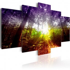 Cuadro - Rainbow Forest