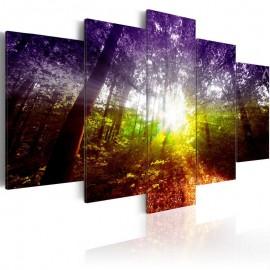 Quadro - Rainbow Forest