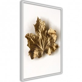 Póster - Dried Maple Leaf