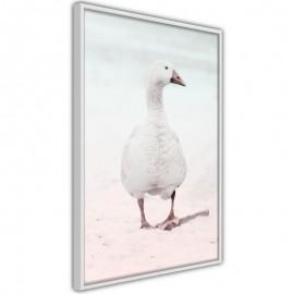 Póster - Walking Goose