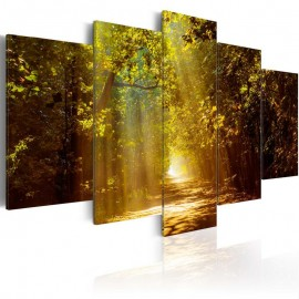Quadro - Forest in the Sunlight