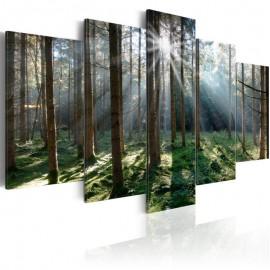 Cuadro - Fairytale Forest