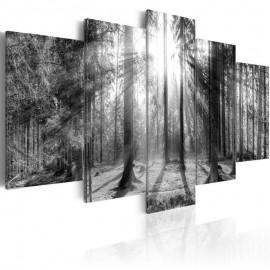 Quadro - Forest of Memories