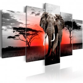 Cuadro - Lonely Elephant